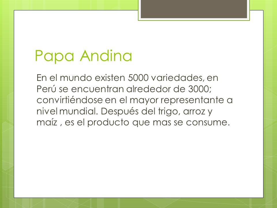 Papa Andina En el mundo existen 5000 variedades, en Perú se encuentran alrededor de 3000; convirtiéndose en el mayor representante a nivel mundial. De