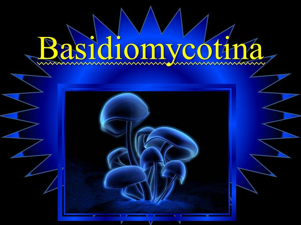 PUCCINIA STRIIFORMIS F.SP. TRITICI Es una roya que afecta a la planta del trigo (Triticum sps).