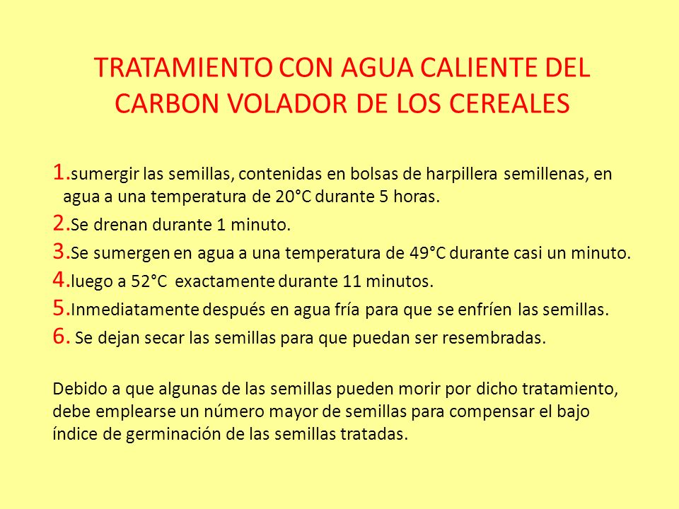 CONTROL DEL CARBON VOLADOR DE LOS CEREALES El control del carbón volador se logra mediante el tratamiento de las semillas infectadas con carboxina y s