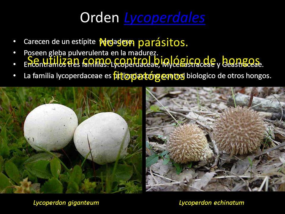 Orden TremellalesTremellales Orden AuricularialesAuriculariales Orden LycoperdalesLycoperdales Orden AgaricalesAgaricales Orden BoletalesBoletales Ord
