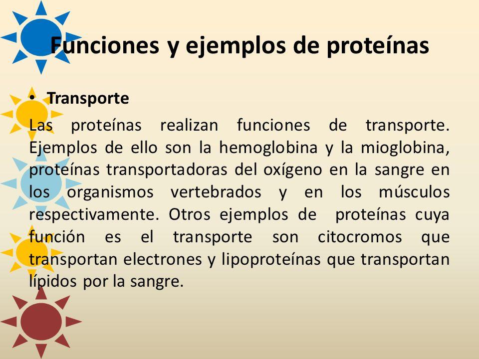 Transporte Las proteínas realizan funciones de transporte. Ejemplos de ello son la hemoglobina y la mioglobina, proteínas transportadoras del oxígeno