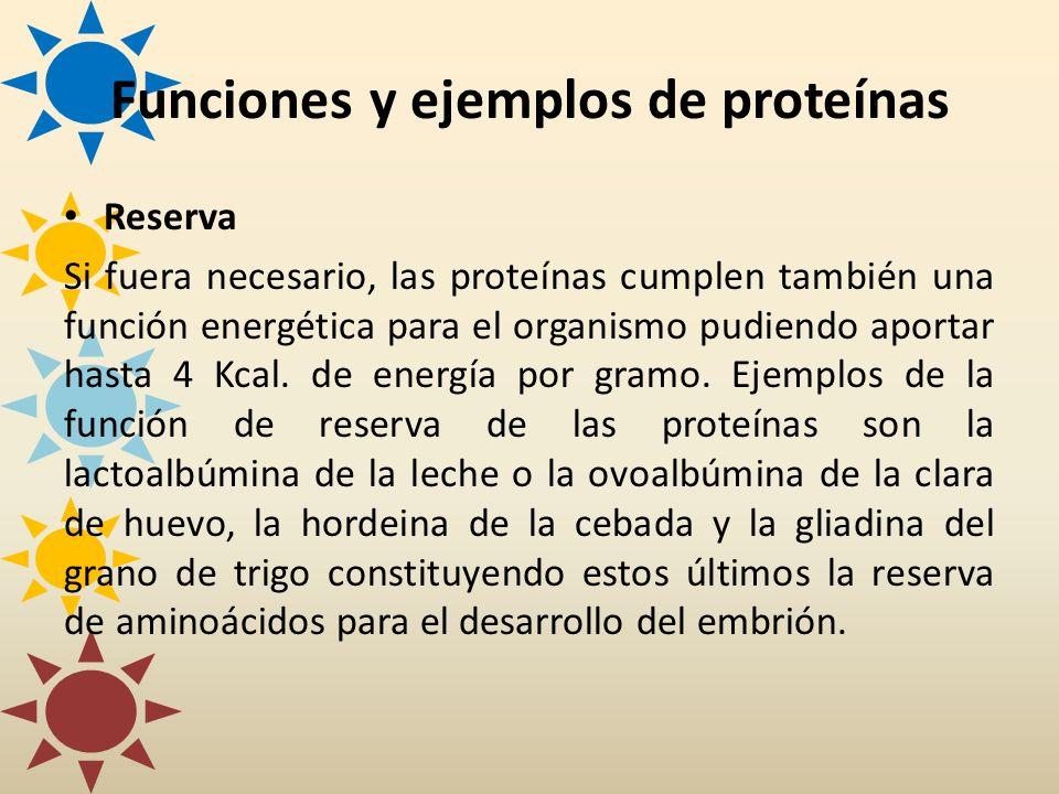 Reserva Si fuera necesario, las proteínas cumplen también una función energética para el organismo pudiendo aportar hasta 4 Kcal. de energía por gramo