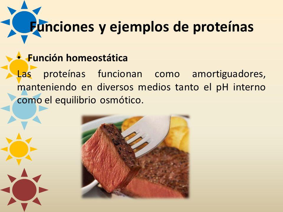 Función homeostática Las proteínas funcionan como amortiguadores, manteniendo en diversos medios tanto el pH interno como el equilibrio osmótico. Func