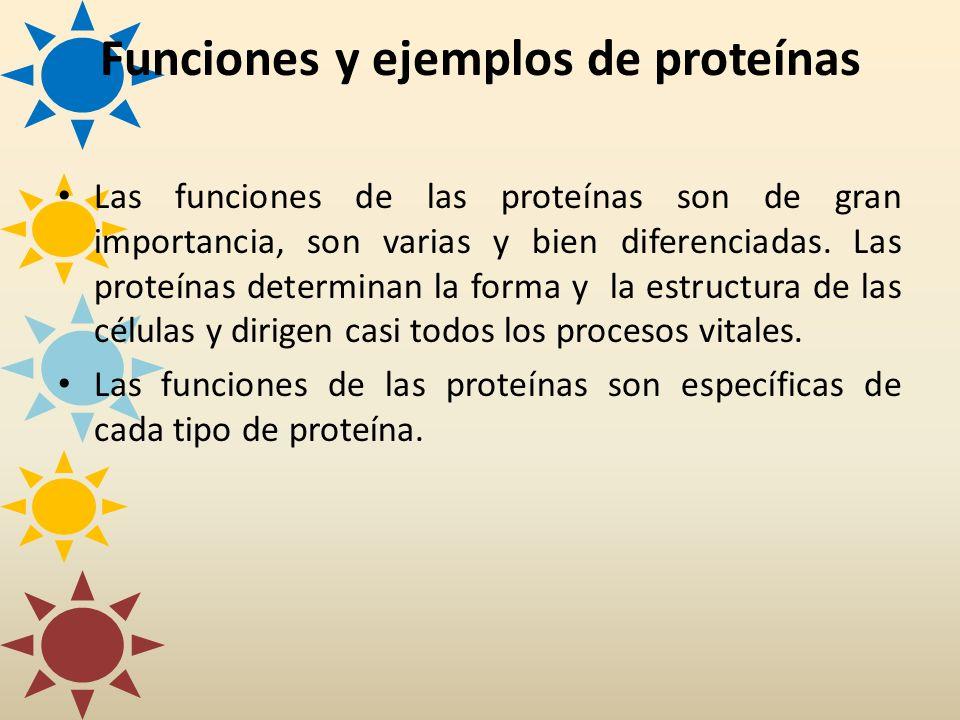 Funciones y ejemplos de proteínas Las funciones de las proteínas son de gran importancia, son varias y bien diferenciadas. Las proteínas determinan la