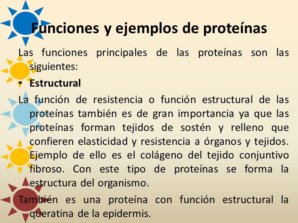 Las funciones principales de las proteínas son las siguientes: Estructural La función de resistencia o función estructural de las proteínas también es