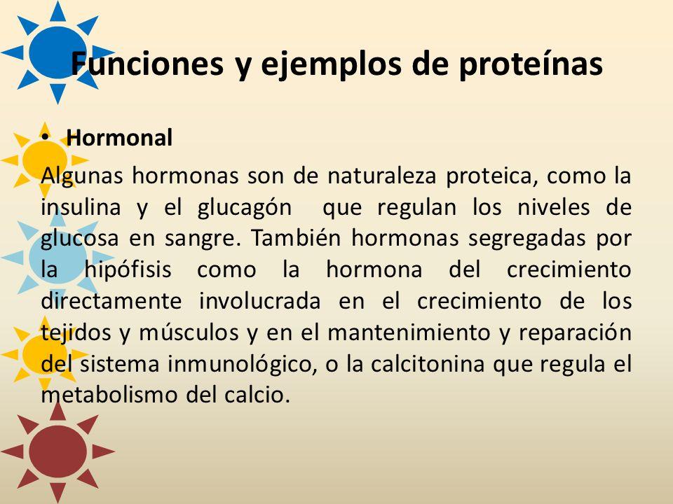 Hormonal Algunas hormonas son de naturaleza proteica, como la insulina y el glucagón que regulan los niveles de glucosa en sangre. También hormonas se