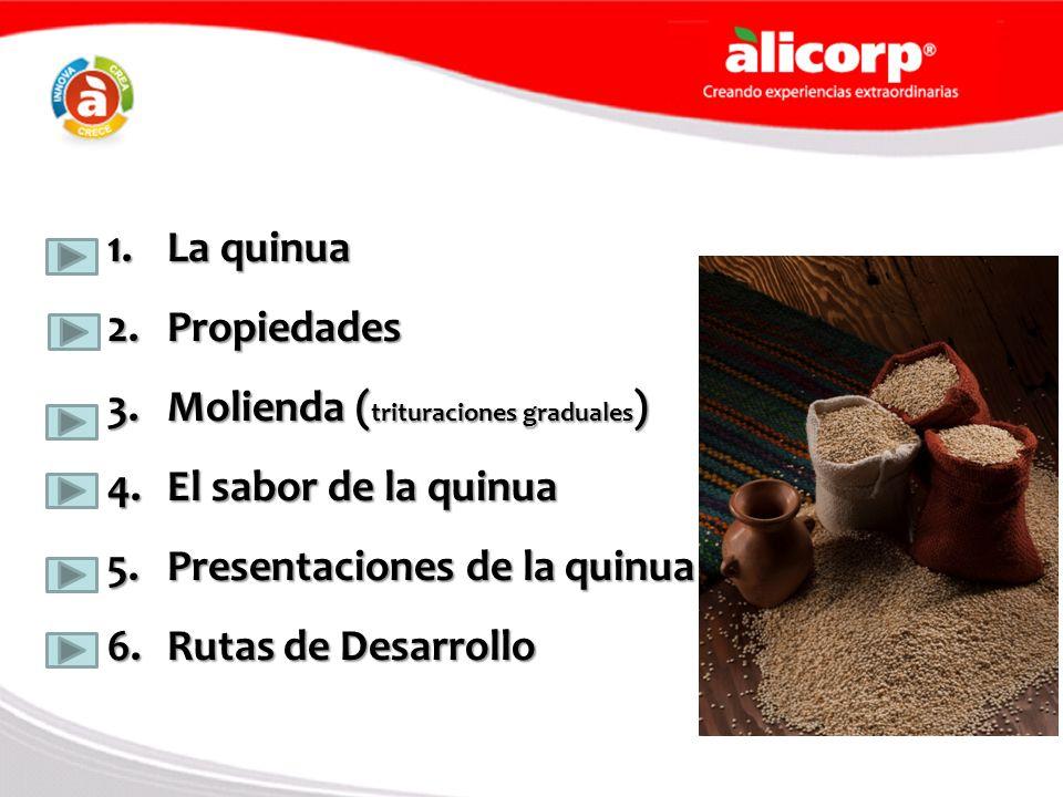 1.La quinua 2.Propiedades 3.Molienda ( trituraciones graduales ) 4.El sabor de la quinua 5.Presentaciones de la quinua 6.Rutas de Desarrollo