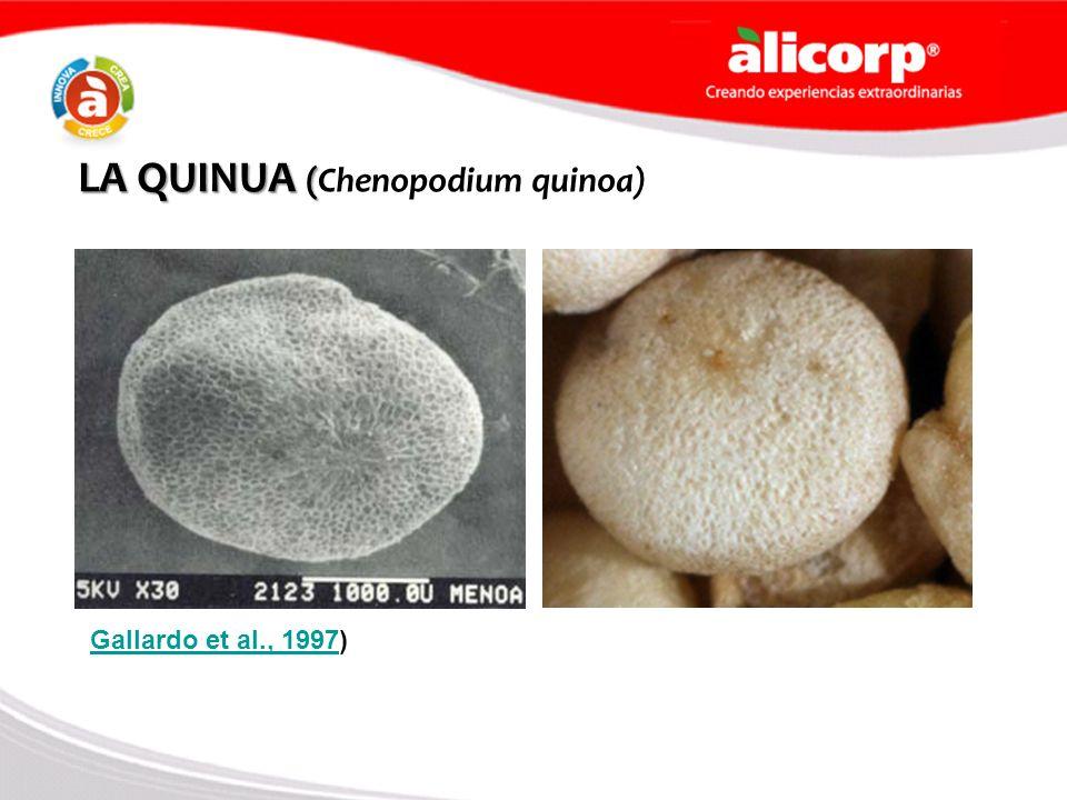 LA QUINUA ( LA QUINUA (Chenopodium quinoa) Gallardo et al., 1997Gallardo et al., 1997)