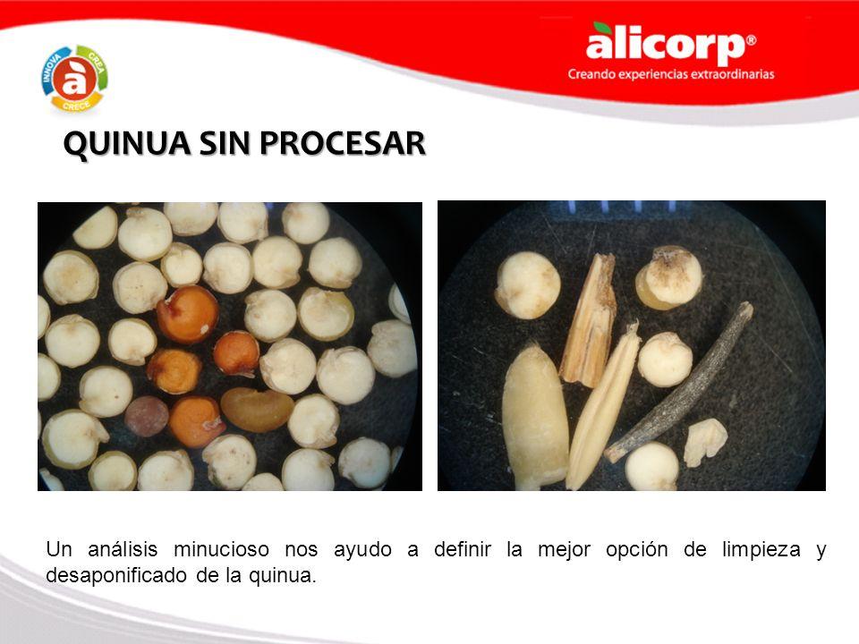 QUINUA SIN PROCESAR Un análisis minucioso nos ayudo a definir la mejor opción de limpieza y desaponificado de la quinua.