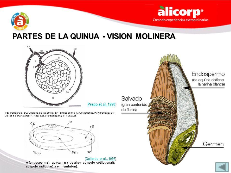 PARTES DE LA QUINUA - VISION MOLINERA Prego et al, 1998Prego et al, 1998) (Gallardo et al., 1997)Gallardo et al., 1997 e (endosperma); ac (camara de a
