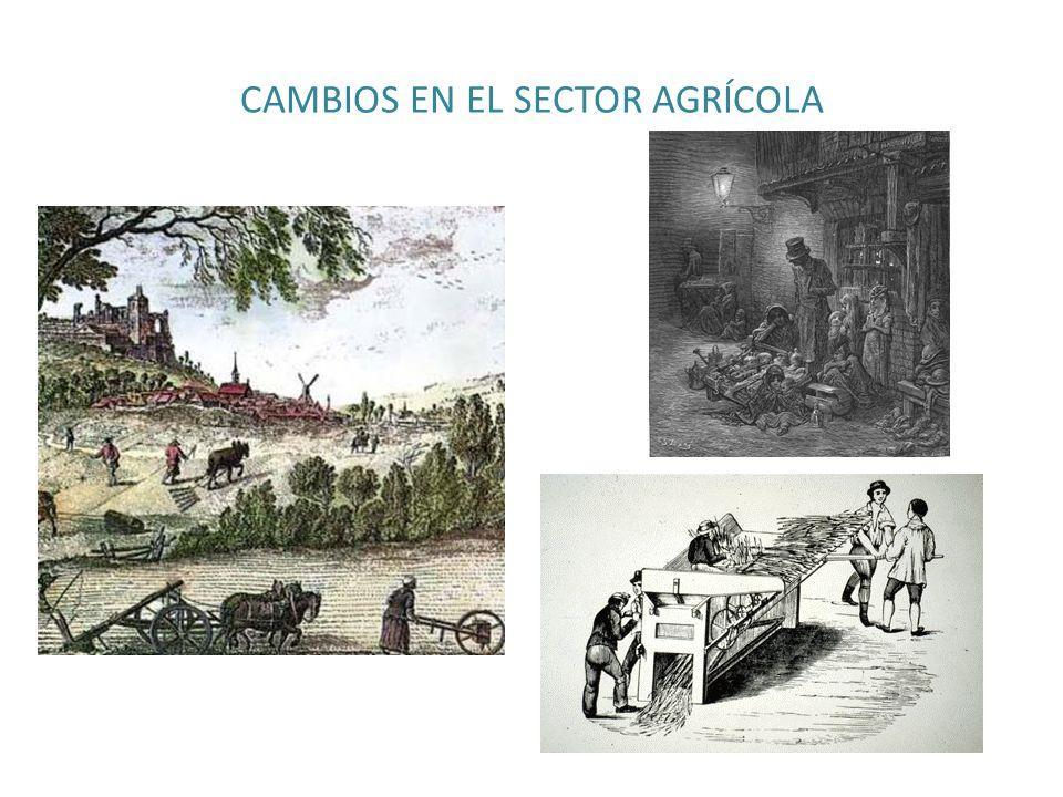 CAMBIOS EN EL SECTOR AGRÍCOLA