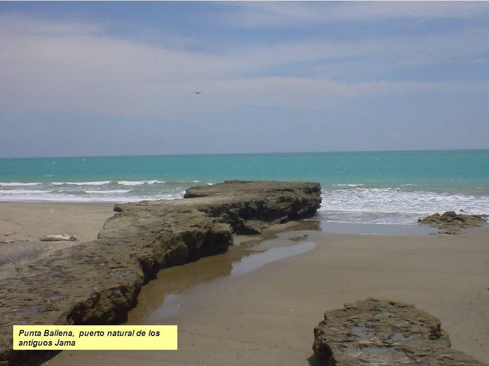 Punta Ballena, puerto natural de los antiguos Jama