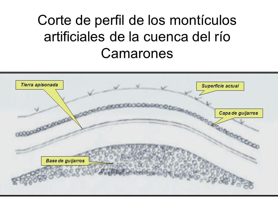 Corte de perfil de los montículos artificiales de la cuenca del río Camarones Superficie actual Capa de guijarros Tierra apisonada Base de guijarros