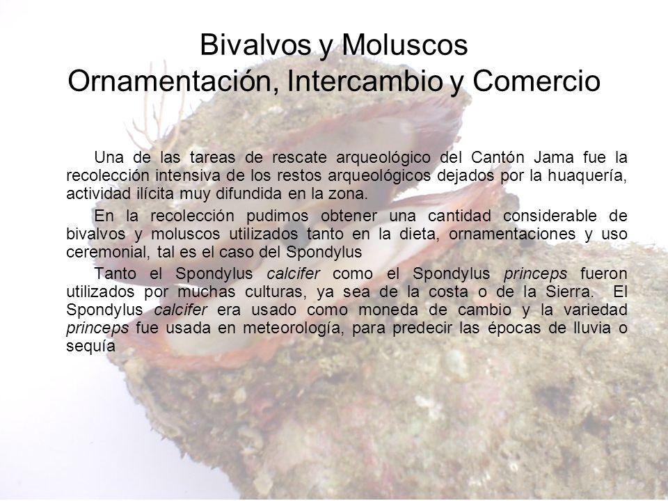 Una de las tareas de rescate arqueológico del Cantón Jama fue la recolección intensiva de los restos arqueológicos dejados por la huaquería, actividad