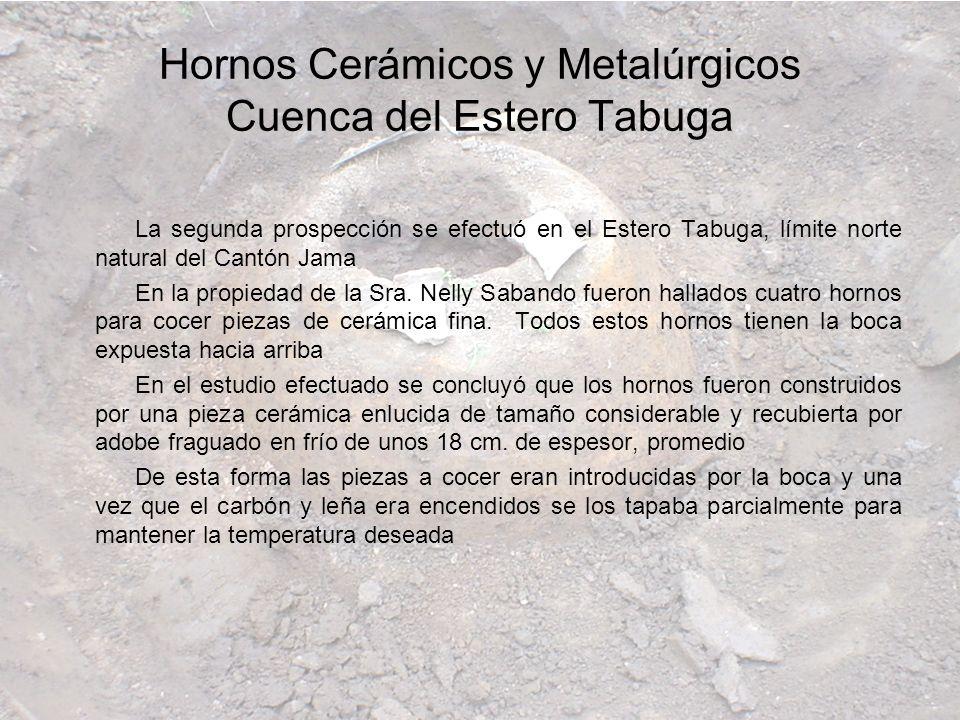 La segunda prospección se efectuó en el Estero Tabuga, límite norte natural del Cantón Jama En la propiedad de la Sra. Nelly Sabando fueron hallados c