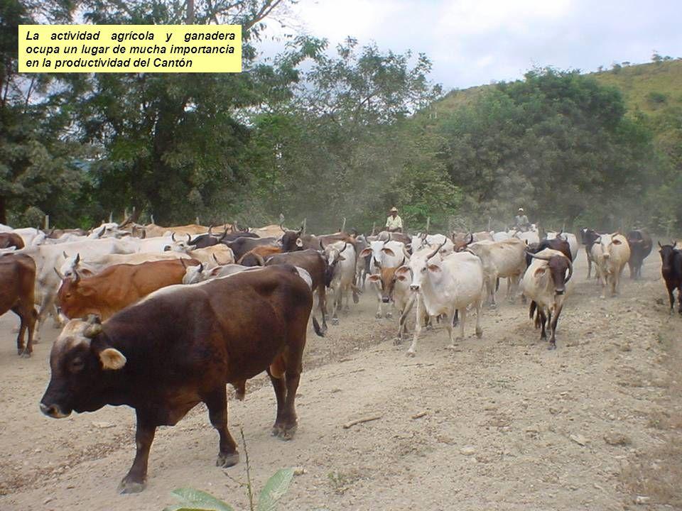 La actividad agrícola y ganadera ocupa un lugar de mucha importancia en la productividad del Cantón