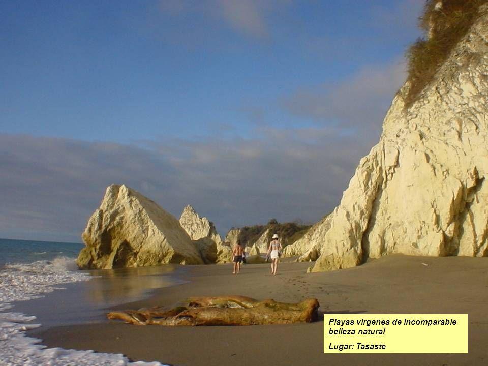 Playas vírgenes de incomparable belleza natural Lugar: Tasaste