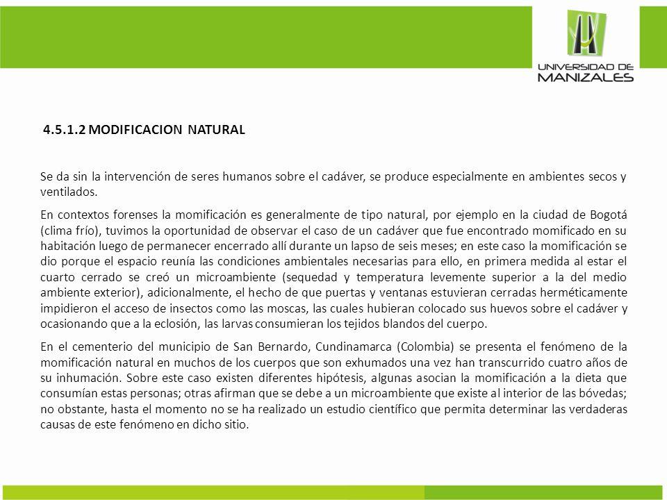 4.5.1.2 MODIFICACION NATURAL Se da sin la intervención de seres humanos sobre el cadáver, se produce especialmente en ambientes secos y ventilados. En