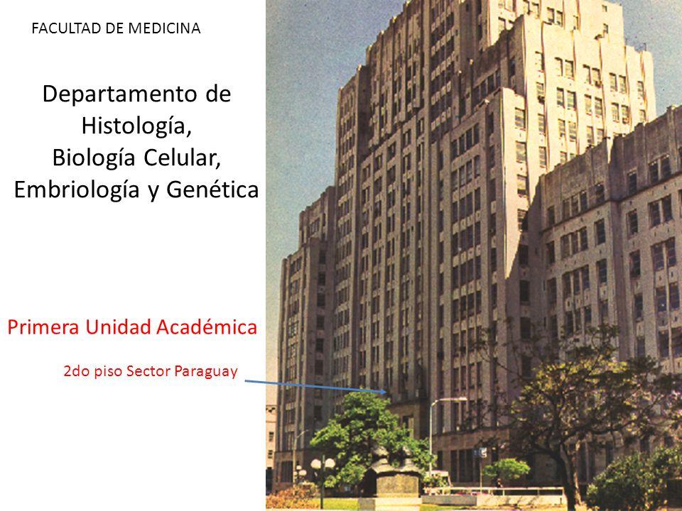 Departamento de Histología, Biología Celular, Embriología y Genética 2do piso Sector Paraguay FACULTAD DE MEDICINA Primera Unidad Académica