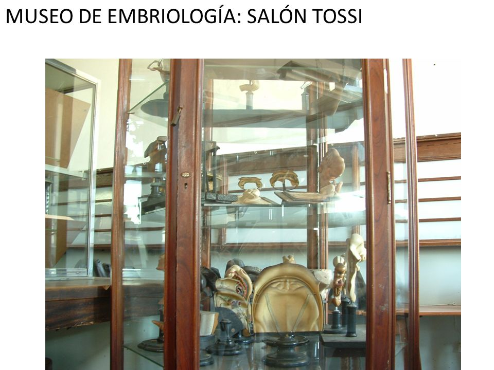 MUSEO DE EMBRIOLOGÍA: SALÓN TOSSI