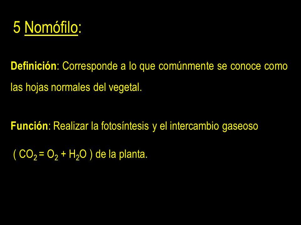 5 Nomófilo: Definición : Corresponde a lo que comúnmente se conoce como las hojas normales del vegetal.