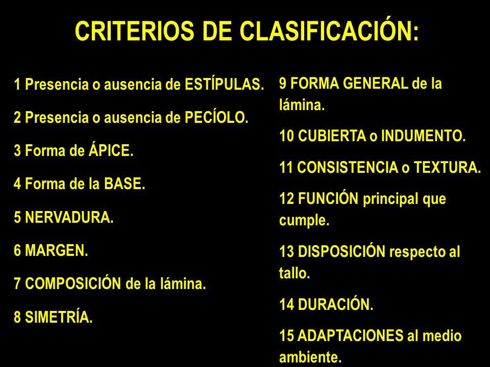 CRITERIOS DE CLASIFICACIÓN: 1 Presencia o ausencia de ESTÍPULAS.