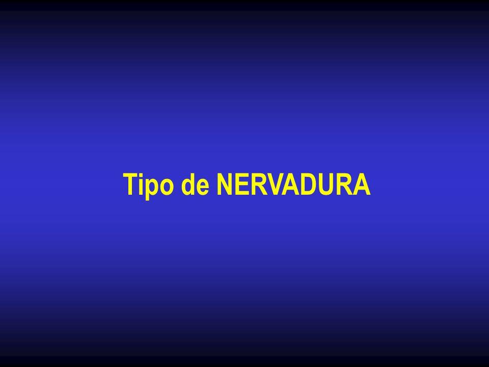 Tipo de NERVADURA