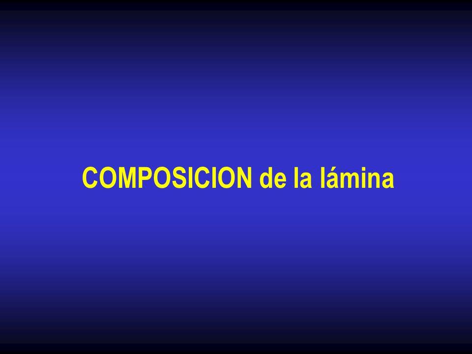 COMPOSICION de la lámina