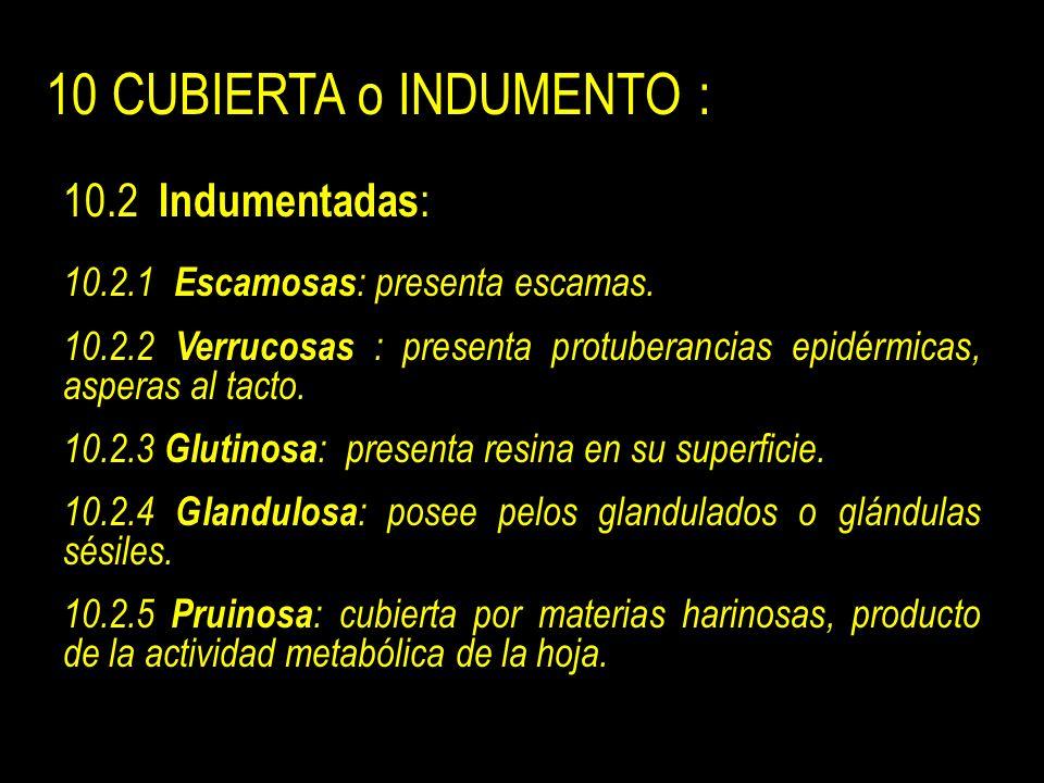 10 CUBIERTA o INDUMENTO : 10.2 Indumentadas : 10.2.1 Escamosas : presenta escamas.