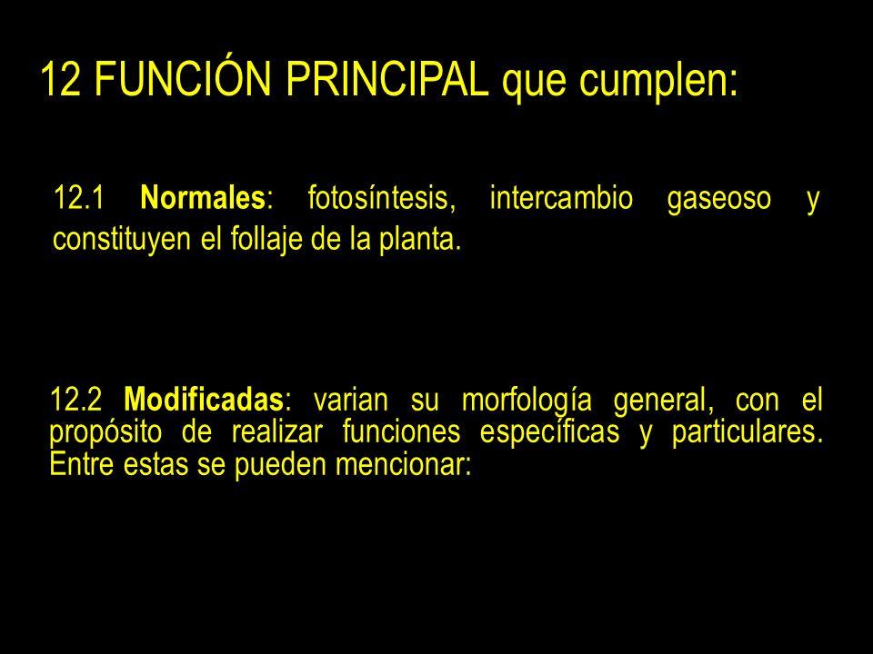 12 FUNCIÓN PRINCIPAL que cumplen: 12.1 Normales : fotosíntesis, intercambio gaseoso y constituyen el follaje de la planta.