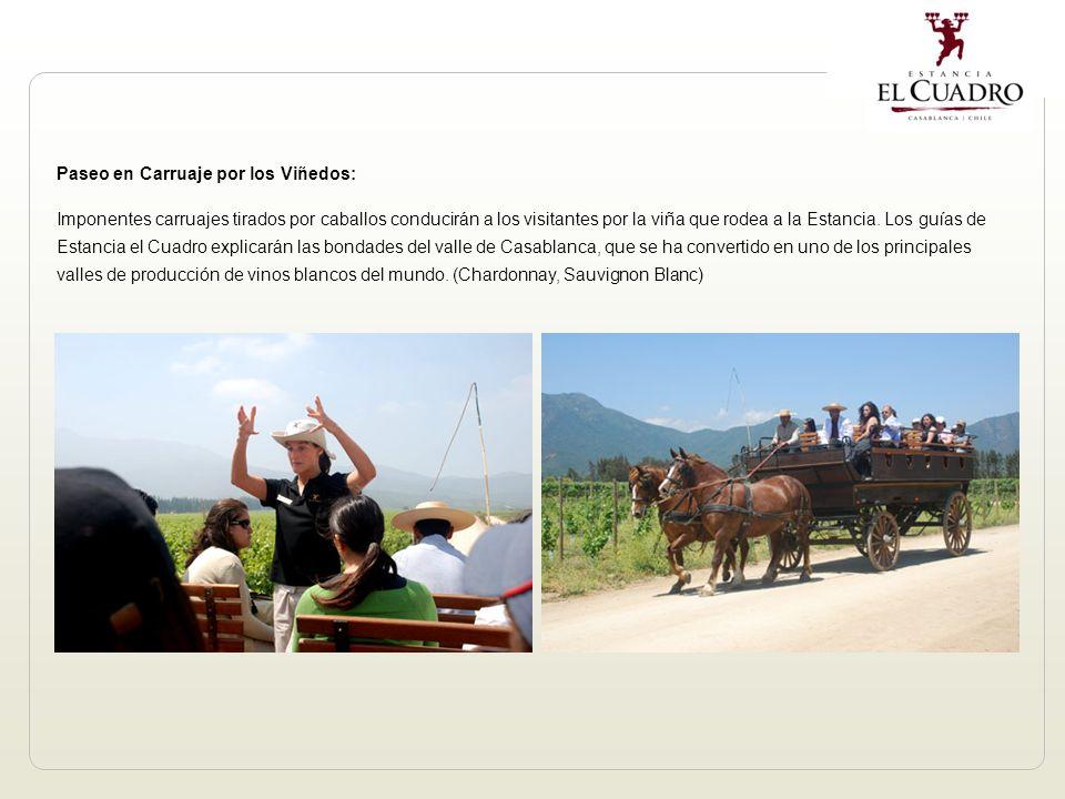 Paseo en Carruaje por los Viñedos: Imponentes carruajes tirados por caballos conducirán a los visitantes por la viña que rodea a la Estancia.