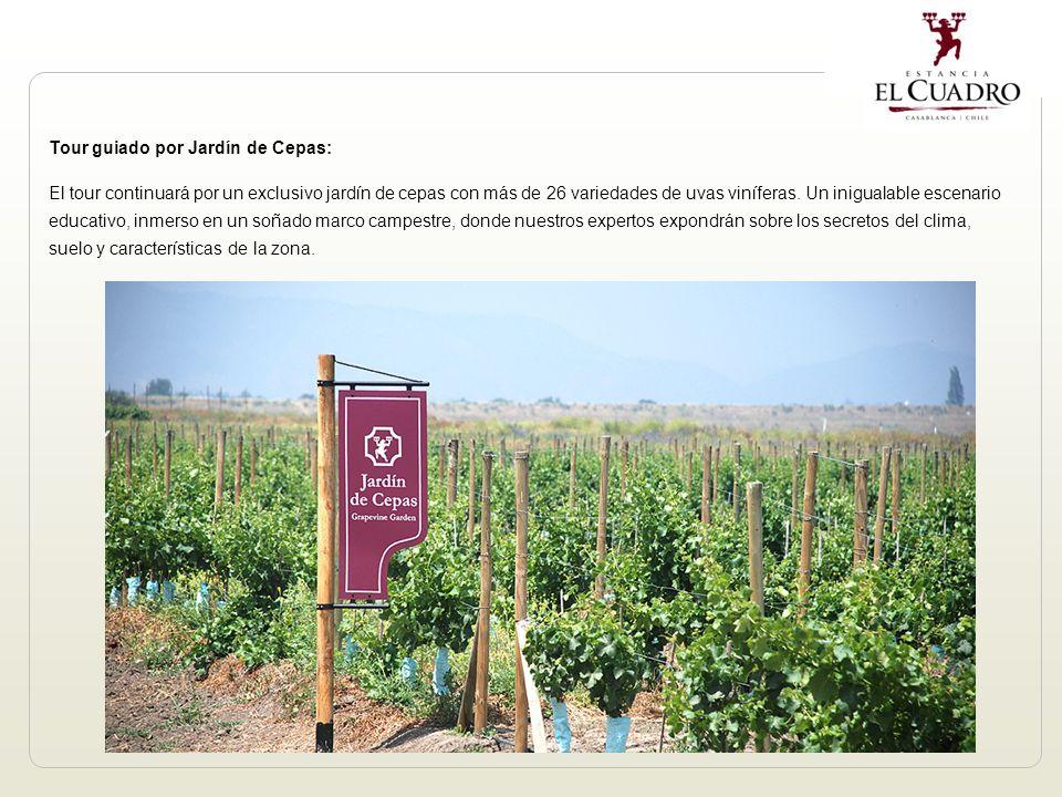 Tour guiado por Jardín de Cepas: El tour continuará por un exclusivo jardín de cepas con más de 26 variedades de uvas viníferas.