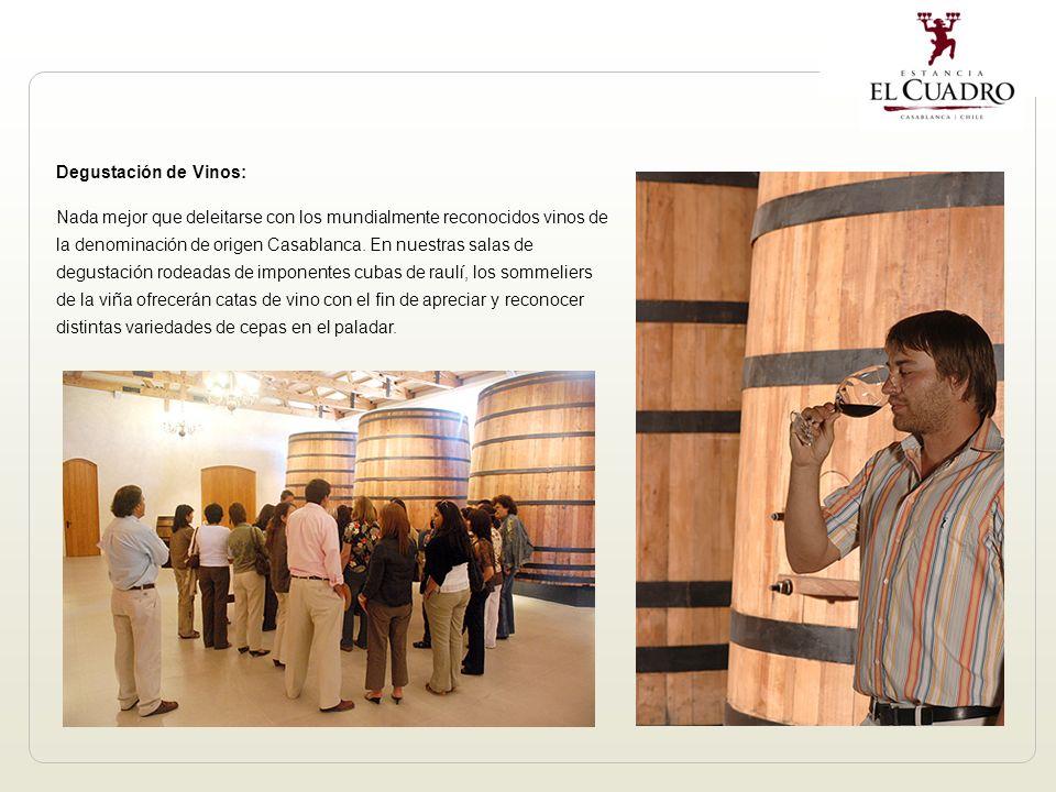 Degustación de Vinos: Nada mejor que deleitarse con los mundialmente reconocidos vinos de la denominación de origen Casablanca.
