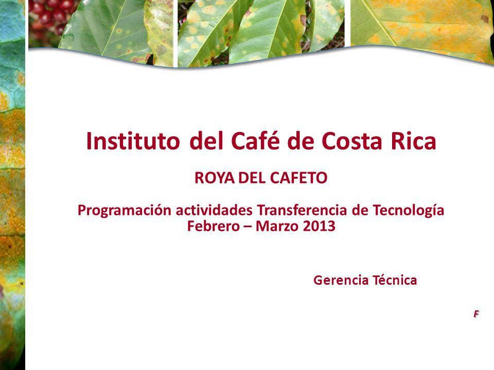 Instituto del Café de Costa Rica ROYA DEL CAFETO Programación actividades Transferencia de Tecnología Febrero – Marzo 2013 Gerencia TécnicaF