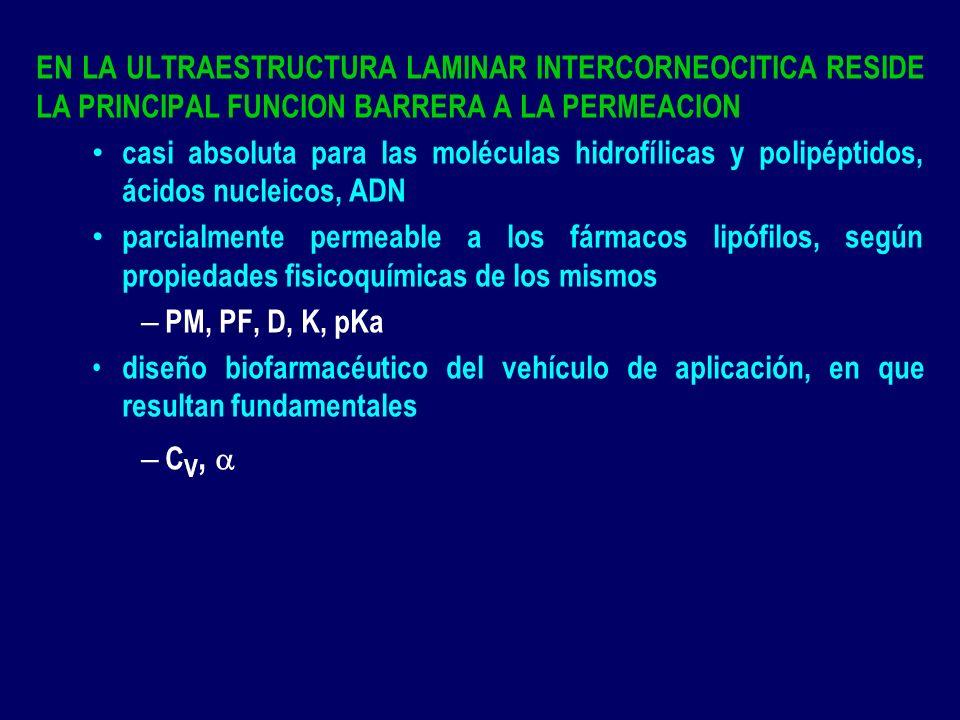 MUCINAS SALIVARES GIGANTES GLICOPROTEINAS CON PM 1-40x10 6 Da, CON ESTRUCTURA PROTEICA LINEAR ALTAMENTE GLICOSILADA POR CADENAS LATERALES DE OLIGOSACARIDOS, QUE CONSTITUYEN EL 50-80% DEL PESO SECO DE LAS MUCINAS viscosidad del gel lubricante que caracteriza al mucus viscoso, segregado por las células epiteliales el entrelazamiento con las moléculas poliméricas de la FF mucoadhesiva, y de la ulterior bioadhesión LOS MONOMEROS FORMAN TETRAMEROS MEDIANTE UNIONES DISULFURO, LAS QUE ACTUAN COMO VISAGRAS, CON GRAN RESPONSABILIDAD