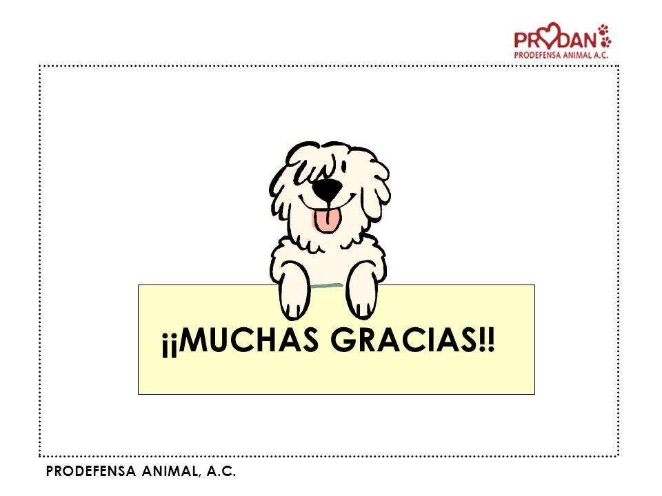 PRODEFENSA ANIMAL, A.C. ¡¡MUCHAS GRACIAS!!