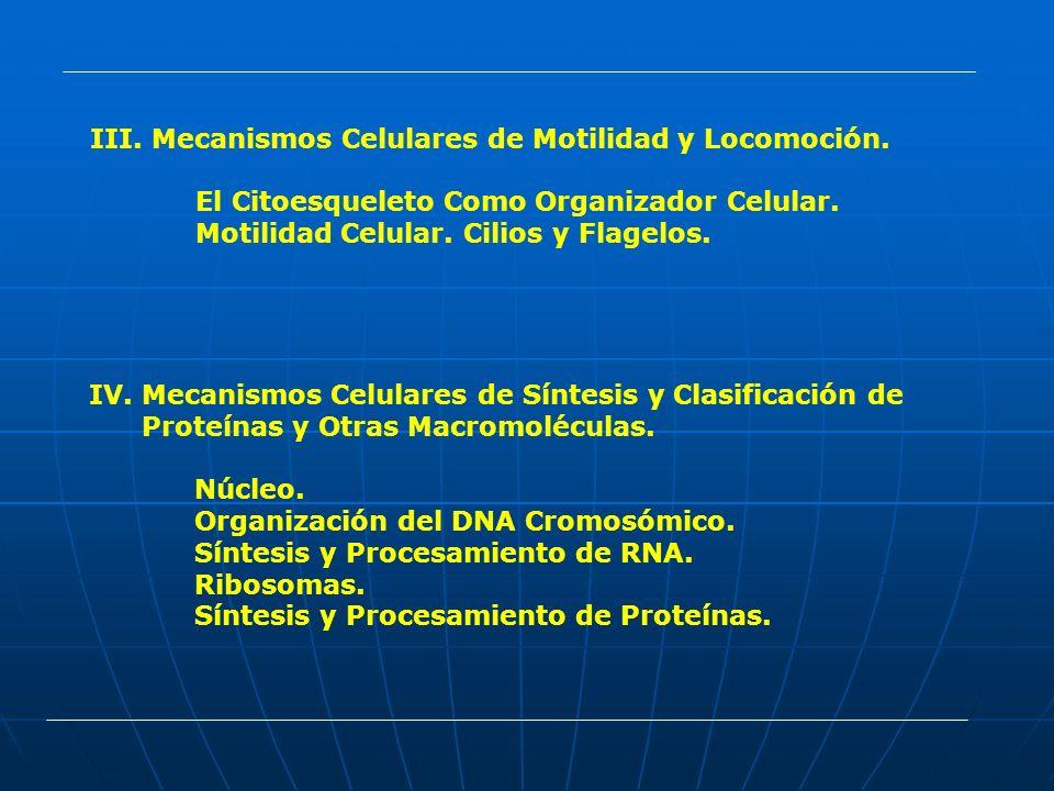 III. Mecanismos Celulares de Motilidad y Locomoción. El Citoesqueleto Como Organizador Celular. Motilidad Celular. Cilios y Flagelos. IV.Mecanismos Ce