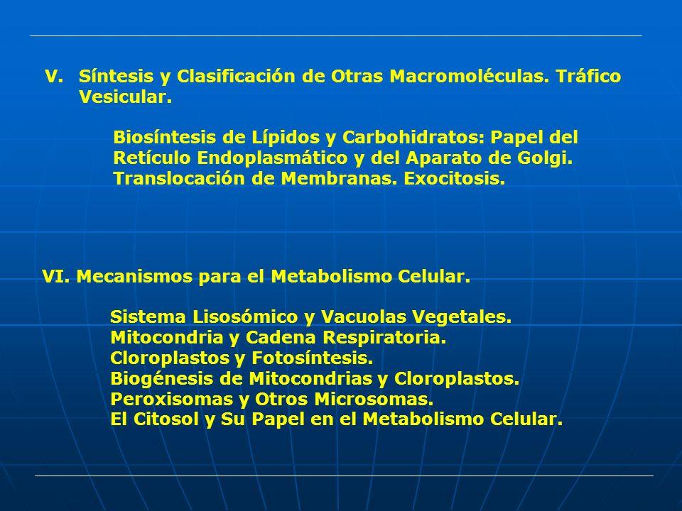 V.Síntesis y Clasificación de Otras Macromoléculas. Tráfico Vesicular. Biosíntesis de Lípidos y Carbohidratos: Papel del Retículo Endoplasmático y del