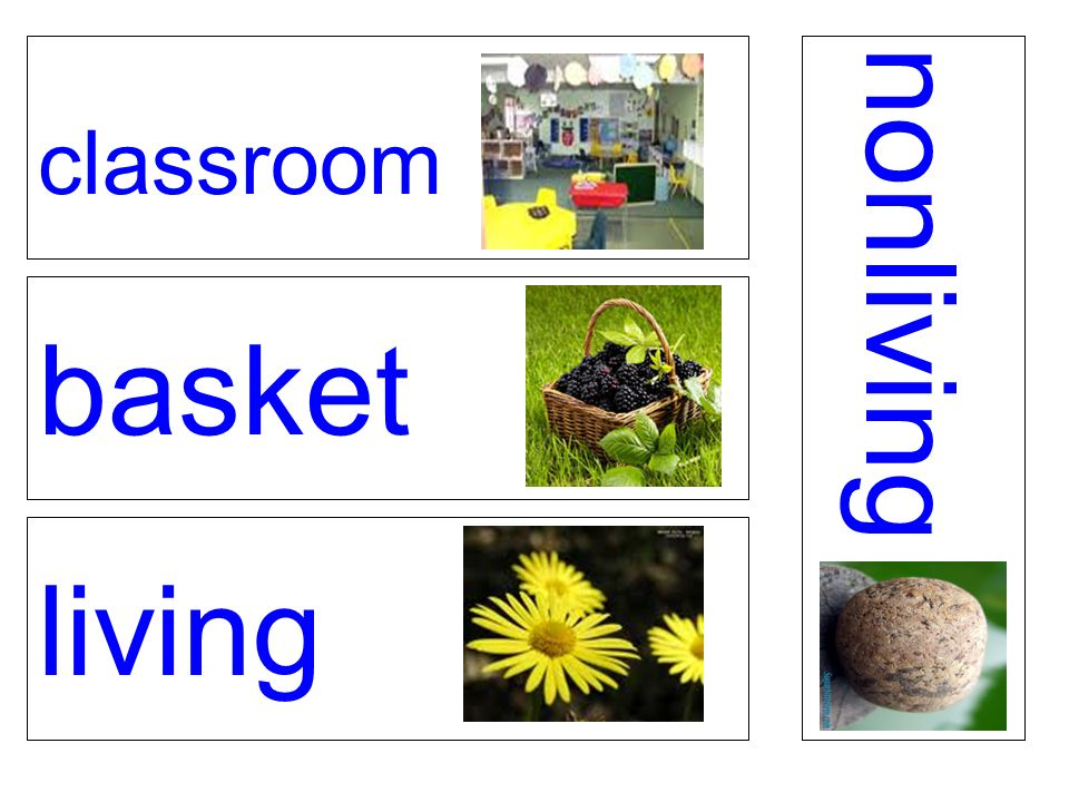 classroom basket living nonliving
