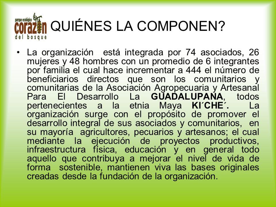 QUIÉNES LA COMPONEN? La organización está integrada por 74 asociados, 26 mujeres y 48 hombres con un promedio de 6 integrantes por familia el cual hac
