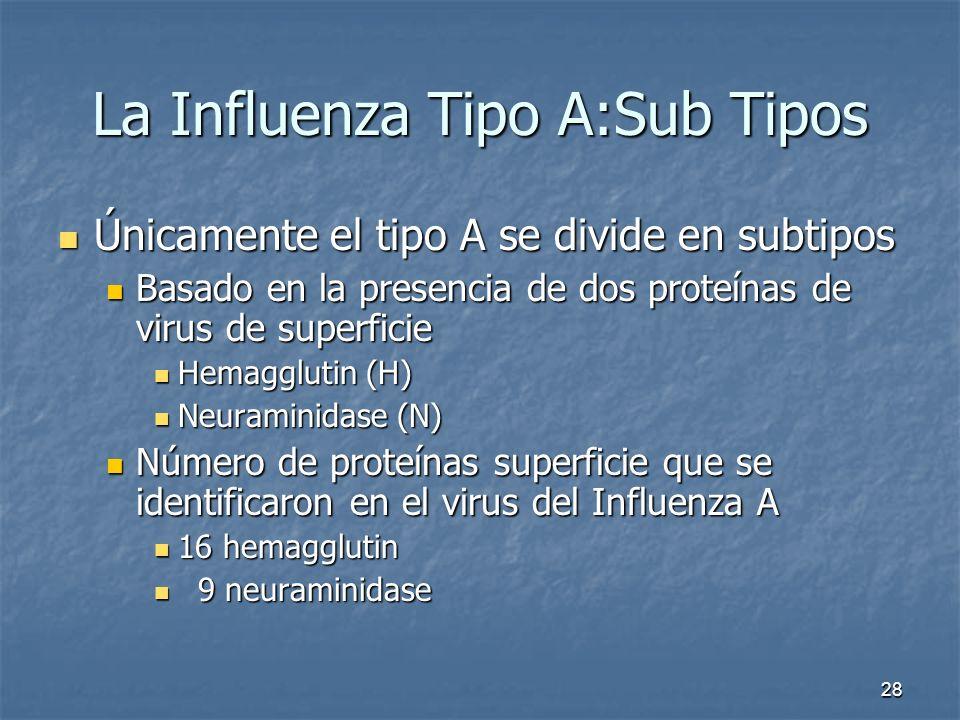 28 La Influenza Tipo A:Sub Tipos Únicamente el tipo A se divide en subtipos Únicamente el tipo A se divide en subtipos Basado en la presencia de dos p