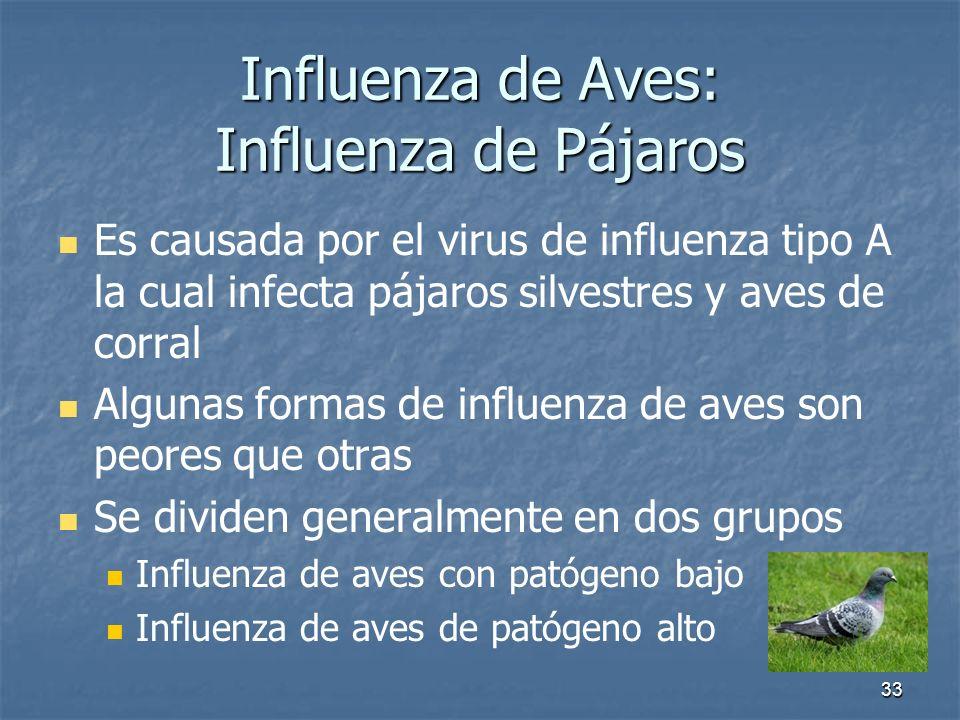 33 Influenza de Aves: Influenza de Pájaros Es causada por el virus de influenza tipo A la cual infecta pájaros silvestres y aves de corral Algunas for