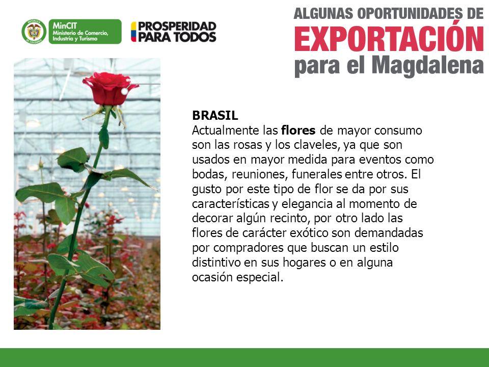 BRASIL Actualmente las flores de mayor consumo son las rosas y los claveles, ya que son usados en mayor medida para eventos como bodas, reuniones, fun
