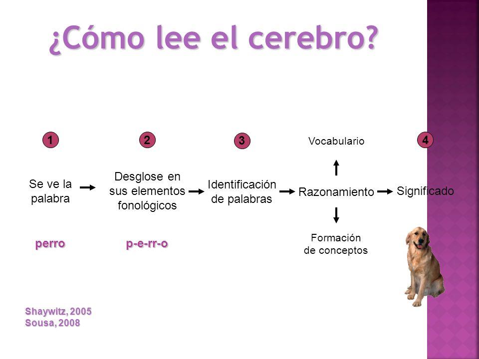1 Se ve la palabra perro 2 Desglose en sus elementos fonológicos p-e-rr-o 3 Identificación de palabras Razonamiento Vocabulario Formación de conceptos
