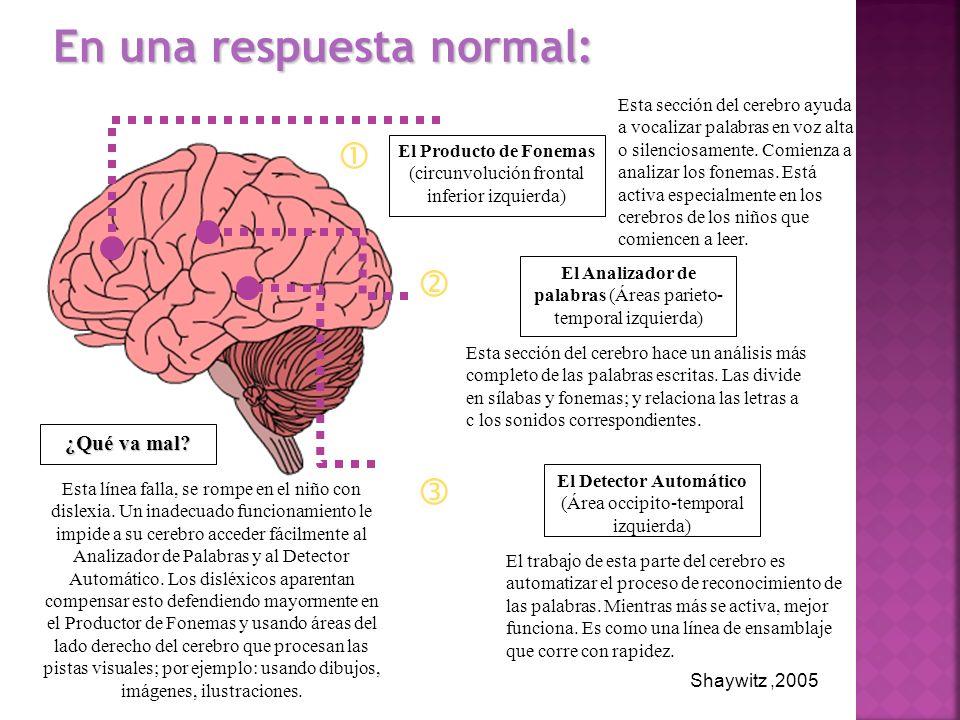 El trabajo de esta parte del cerebro es automatizar el proceso de reconocimiento de las palabras. Mientras más se activa, mejor funciona. Es como una