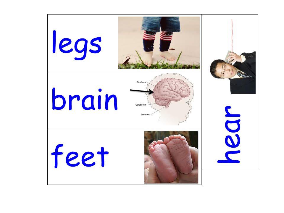 brain hear feet legs