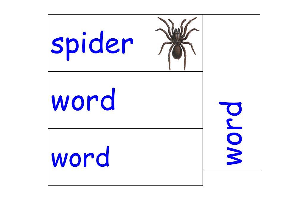 word spider