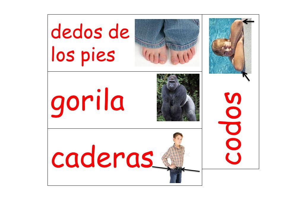 gorila codos caderas dedos de los pies
