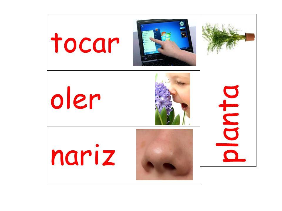 oler planta nariz tocar