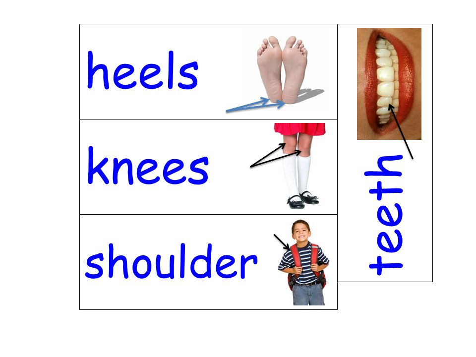 knees teeth shoulder heels